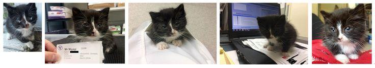 What happens when a vet fosters a sick stray kitten: maximum levels of aww http://ift.tt/2eTrXVy