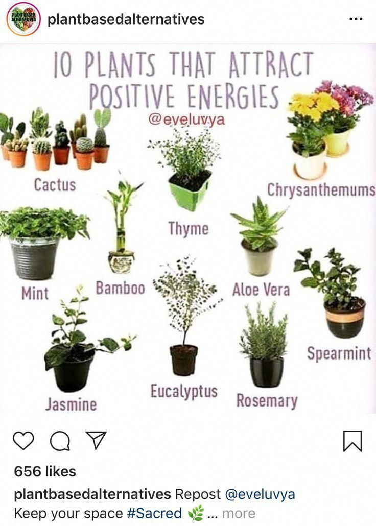 10 Plants That Attract Positive Energies Bathroomplants In 2020 Plants Small Indoor Plants Bathroom Plants
