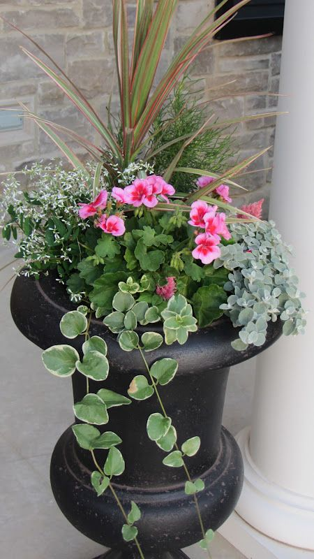 geraniums, diamond frost, vinca vine, spike and fillers - LOVE it for the front porch planters!