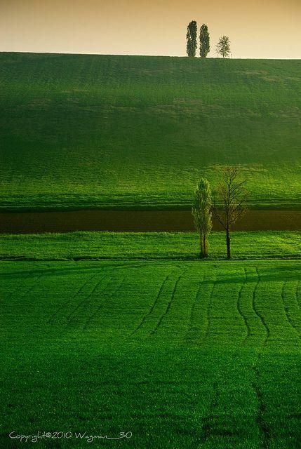 Monferrato Landscape, Northern Italy, province of Alessandria Piemonte