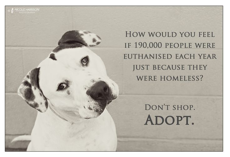 Adopt A Shelter Dog Quotes