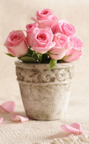 there must always be flowers in my future house!!!