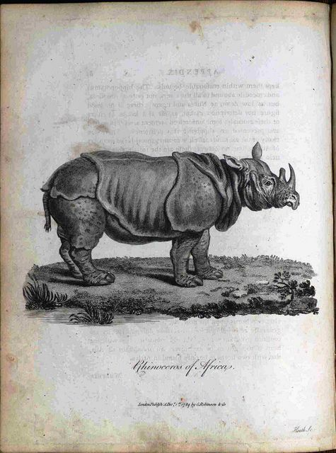Rhinoceros of Africa. by Library & Archives @ Royal Ontario Museum on Flickr. Author: Bruce, James, 1730-1794. Title: Select Specimens of Natural History, Collected in Travels to Discover the Source of the Nile, in Egypt, Arabia, Abyssinia, and...