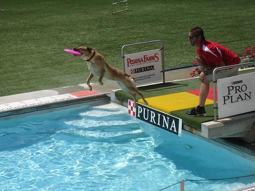 Guard Dog Training St Louis