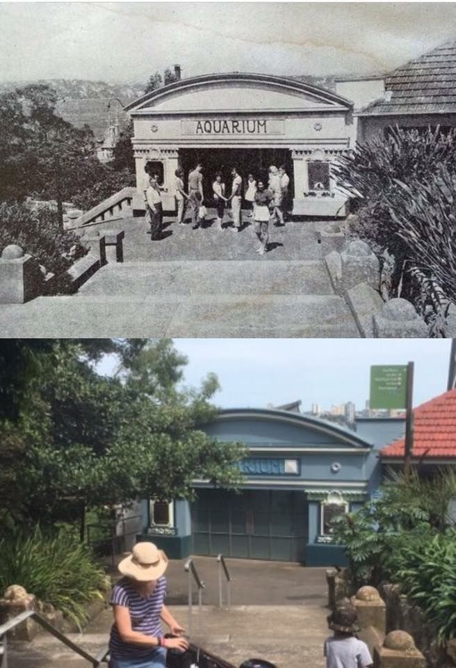 The old aquarium at Taronga Zoo c1970 > 2016. [Zoo visitor guide > Phil Harvey. By Phil Harvey]