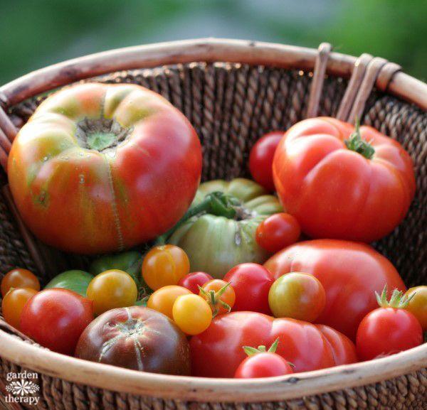 60121a44d6a5c6ee82ce8b025fc370eb - Expert Gardener Organics Vegetable & Tomato Food