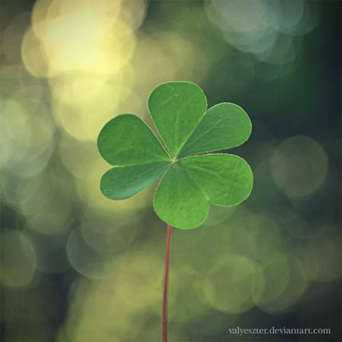 so lucky: Four Leaf Clovers, Favorite Things, Irish Things, Lucky Charms, Happy, Green Clovers, Gorgeous Green, Leaves, St. Patrick'S