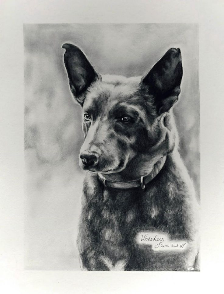 Whiskey the dog drawn in his memory.