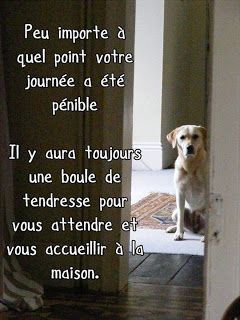 Citations option bonheur: Citation sur les chiens