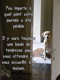 Citations option bonheur: Citation sur les chiens
