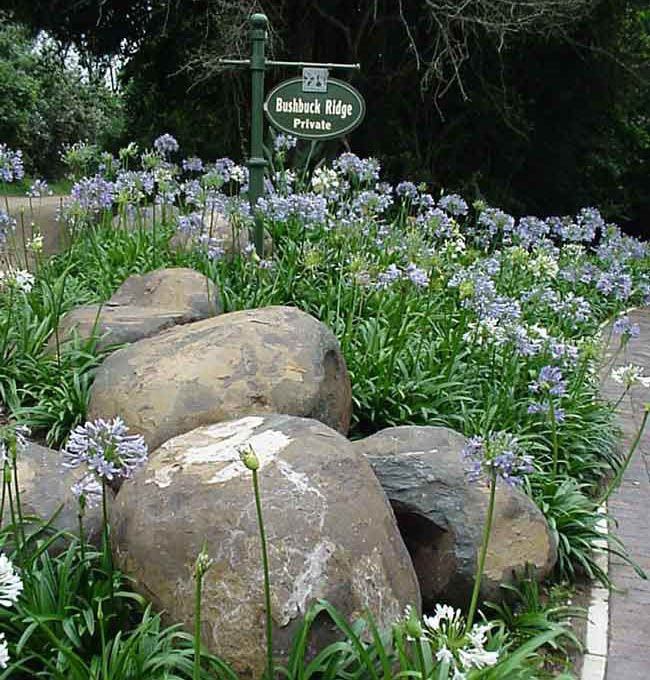 Best 25 south african flowers ideas that you will like on for Small garden designs south africa