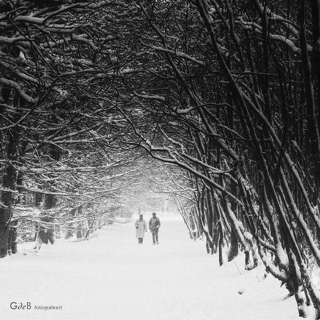 snowwalkers | wandelaars in de sneeuw
