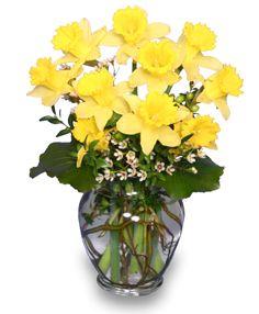 daffodils in flower arrangements | ... Abundance of Spring Flowers Daffodils Flower Killer Or Urban Legend