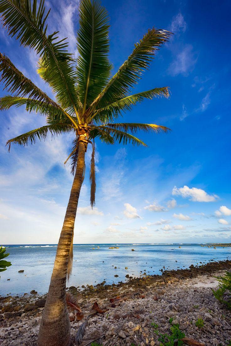 Aitutaki L Palm - null