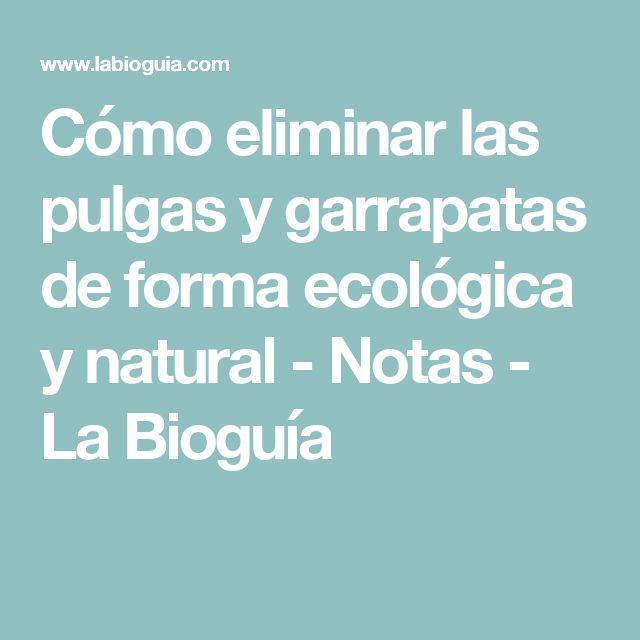 Cómo eliminar las pulgas y garrapatas de forma ecológica y natural - Notas - La Bioguía