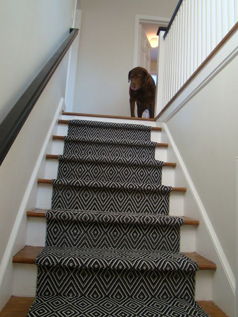 the stairs A few weeks ago we made the decision to put a runner on our stairs. Partly, because our poor old dog, Hampton, is having trou...