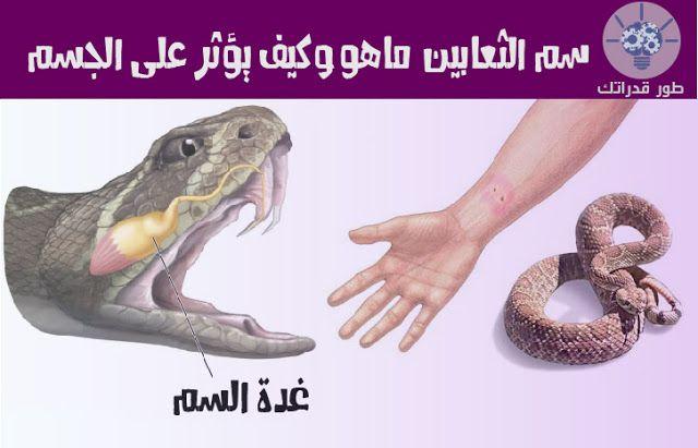 سم الثعبان هو السائل السام يكون في العادة اصفر اللون وهو المخزن في الغدد اللعابية عند الثعابين السامة هناك المئات من Dinosaur Stuffed Animal Blog Posts Blog