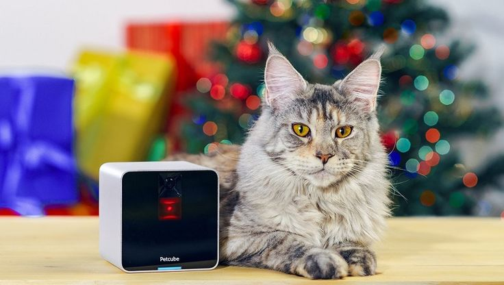 Leaving your cat at home for the holidays can be tough, but these fun cameras make it easy to check in to see what your kitty is up to.