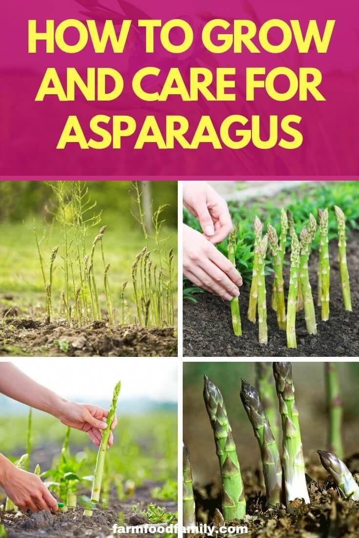 The Dead Soil Requires Increasing Doses Of Standard Fertilizer And Still The Plants Are Organic Vegetable Garden Organic Gardening Tips Home Vegetable Garden