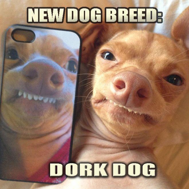 17 Best Images About Memes On Pinterest