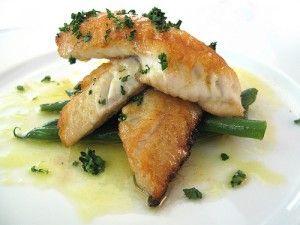 Plated Angelfish