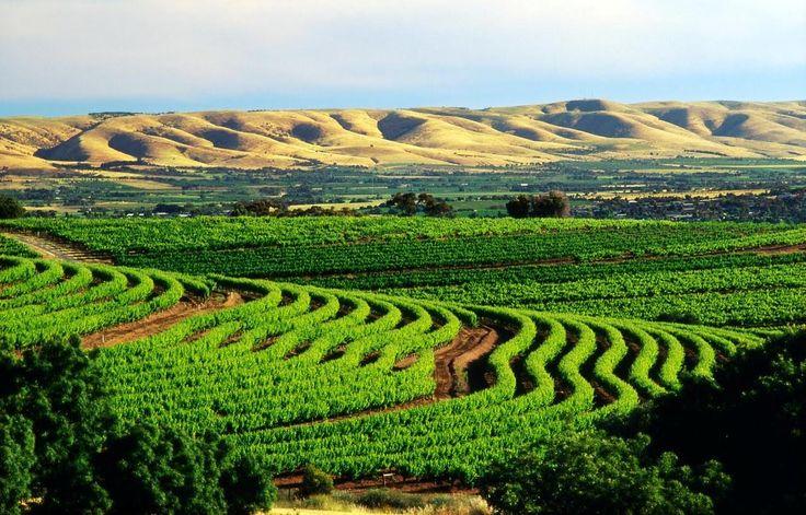 Долина Баросса | Barossa Valley | Южная Австралия | Организуем уникальные путешествия в Австралию и Океанию | beyondjet.com #австралия #винныйтур #экзотика #вино #шираз #barossa #sa