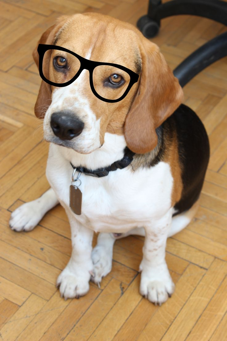 A very smart dog :)