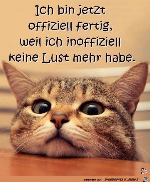 imagen divertida & # 39; no desire.jpg & # 39; de Renilinz. Uno de los 61029 archivos en … – Gatos / Gato   – katzen