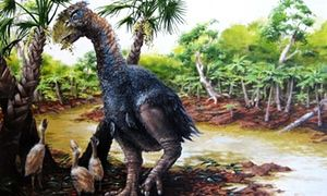 Scientists said the discovery of Gastornis on Ellesmere island provided a better understanding of the consequences of a changed climate.