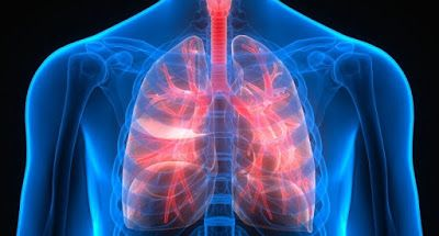 Latest Amazing Facts: The lungs play a key role in blood production