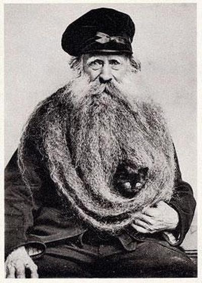 Best Cat Lover Photography Images On Pinterest Old Photos - This photographer is celebrating stray cats through majestic portrait photographs
