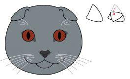 Шотландская вислоухая кошка. Морда