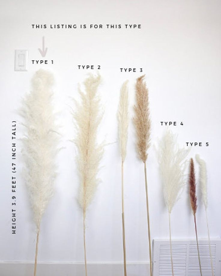 Pampas Grass Large 4 Feet Bleach White Dried Pampas By Luxe B Etsy In 2020 Bohemian Wedding Flowers Grass Decor Pampas Grass Decor