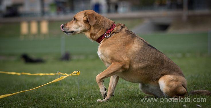 Dog-Shooting