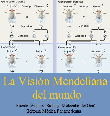 Contenido Gratis! LA VISIÓN MENDELIANA DEL MUNDO  #Genetica #Bioquimica #Mendel #ContedidosGratis #AZMedica