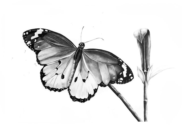 Kendall-Leigh Nash | Butterfly | Buy Original Art Online | StateoftheART