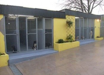 Dog Kennels Business For Sale Spain