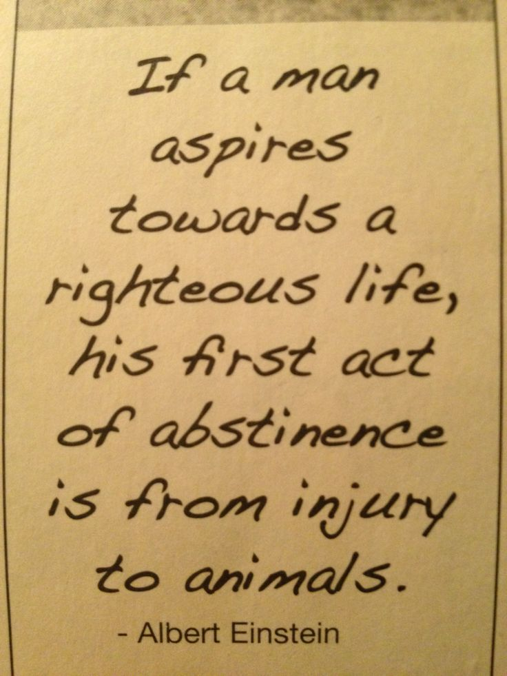 Pro vegan: If a man aspires towards a righteous life, his first act of abstinence is from injury to animals - Albert Einstein.