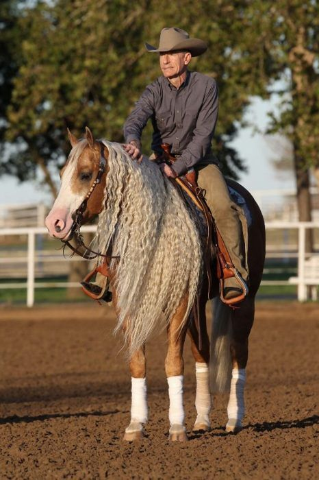 Lyle Lovett and reining horse Smart and Shiney