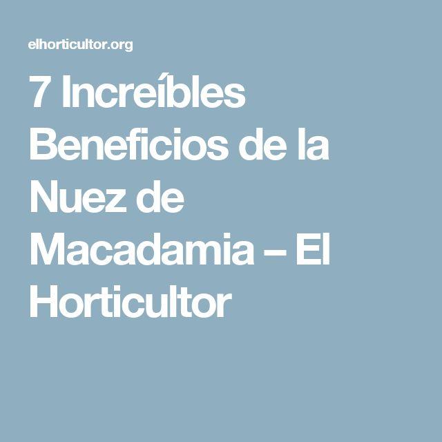 7 Increíbles Beneficios de la Nuez de Macadamia – El Horticultor