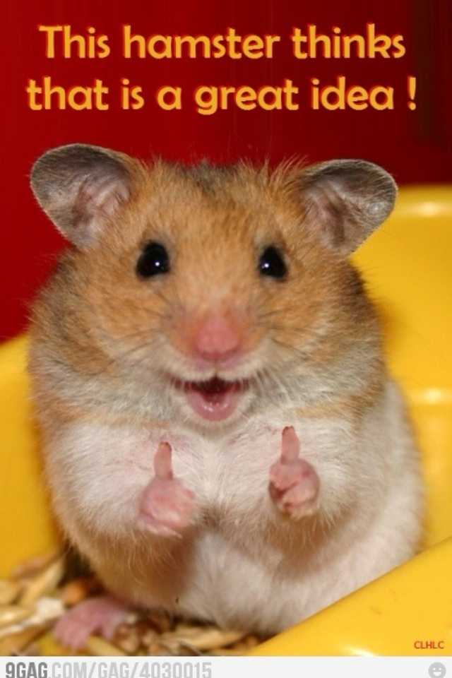 He/she is so cute! Thumbs up little guy/girl.