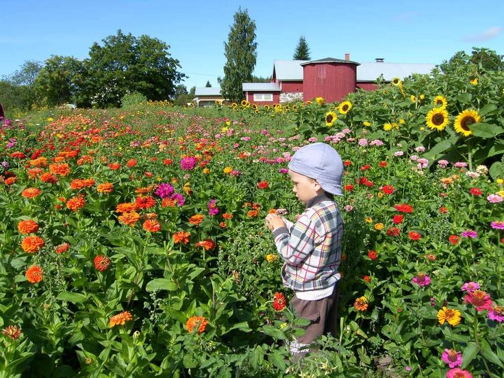 Finnish cutting garden