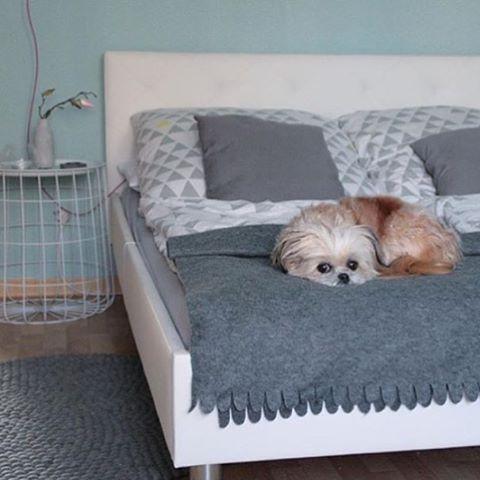 Jaahas, sänky onkin jo varattu 😄😍 - hyvää yötä joka tapauksessa!  Kuva @steffisweltderwunder #sisustus #koira #makuuhuone #sänky #matto #harmaa