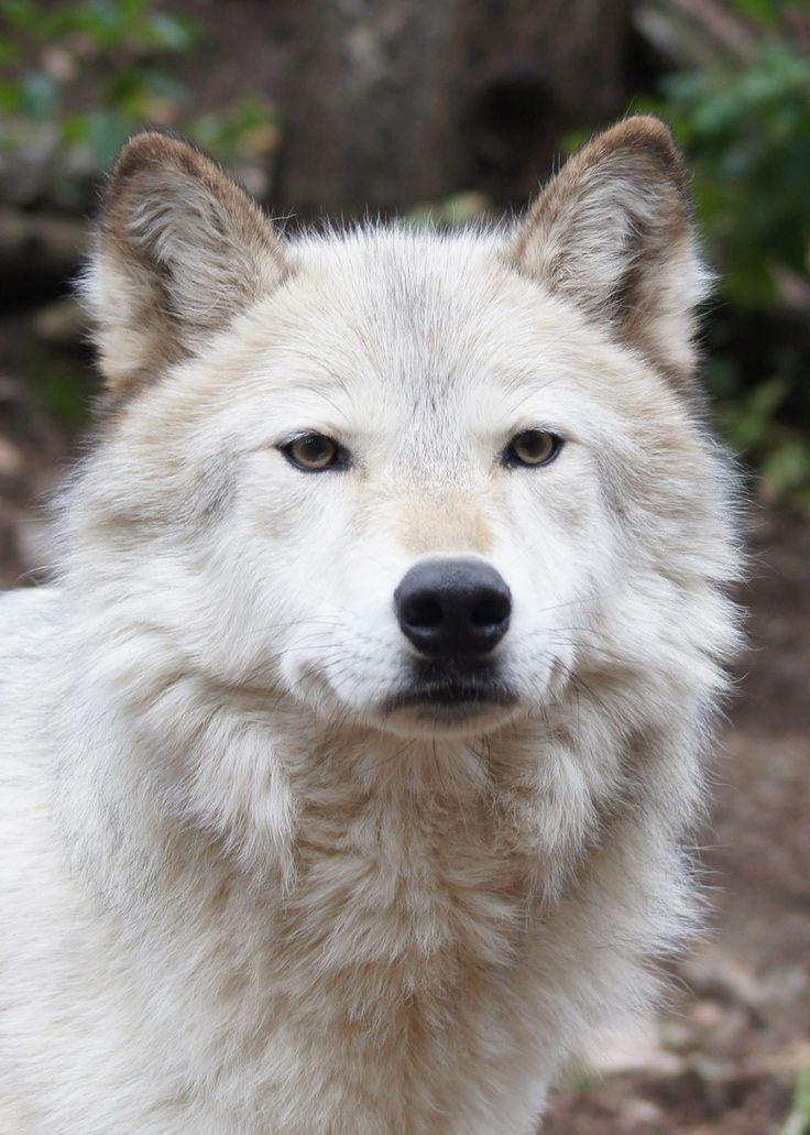 Sign our petition to help protect Wyoming's wolves: http://www.shopforyourcause.com/petition?pn=2