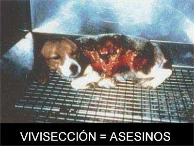 SIGNOR FORMICA: NO A LA EXPERIMENTACIÓN ANIMAL