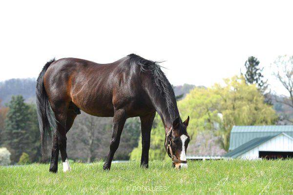 MidAtlanticTB @MidAtlanticTB  Post Time: Hansel, who won the Preakness Stakes 25 years ago, enjoys a regal retirement at Lazy Lane Farms in VA.