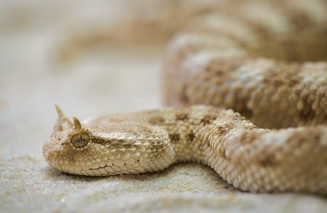 awesome snakes facts