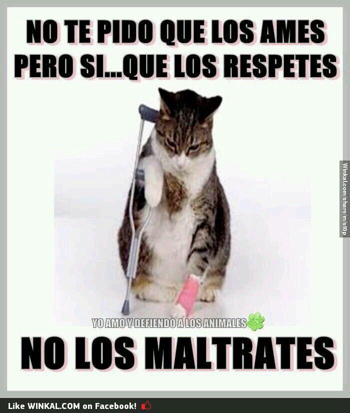 NO AL MALTRATO ANIMAL!!!