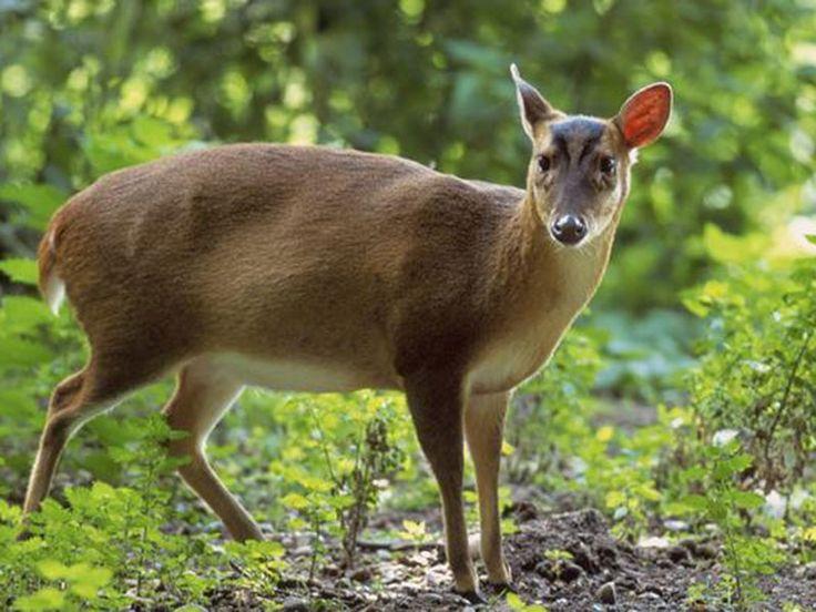 Achanakmar Wildlife Sanctuary - Chhattisgarh, India