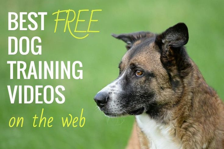 Free Dog Training Videos Online  There's a solid selection of free dog training videos that can help you get started on obedience training with your canine buddy! Check out our top suggestions below.  YouTube Dog Training Videos  There